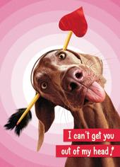 Avanti Valentine's Day Humour Greeting Card