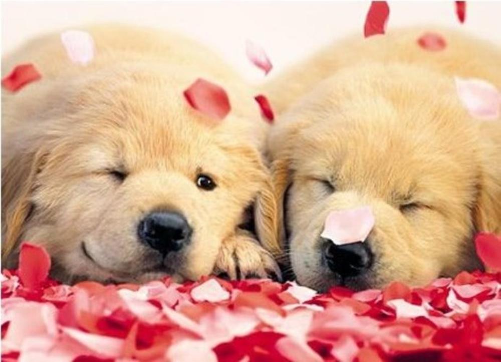 Avanti Hugs & Kisses Valentine's Day Greeting Card