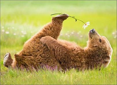 Avanti Valentine's Day Cute Bear Greeting Card