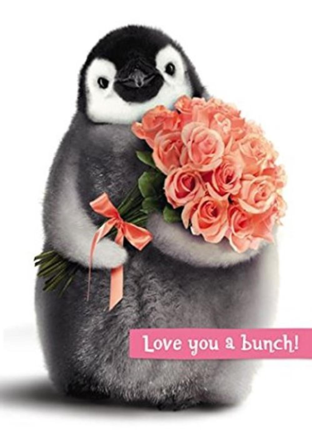 Avanti Wife Valentine's Day Cute Penguin Greeting Card