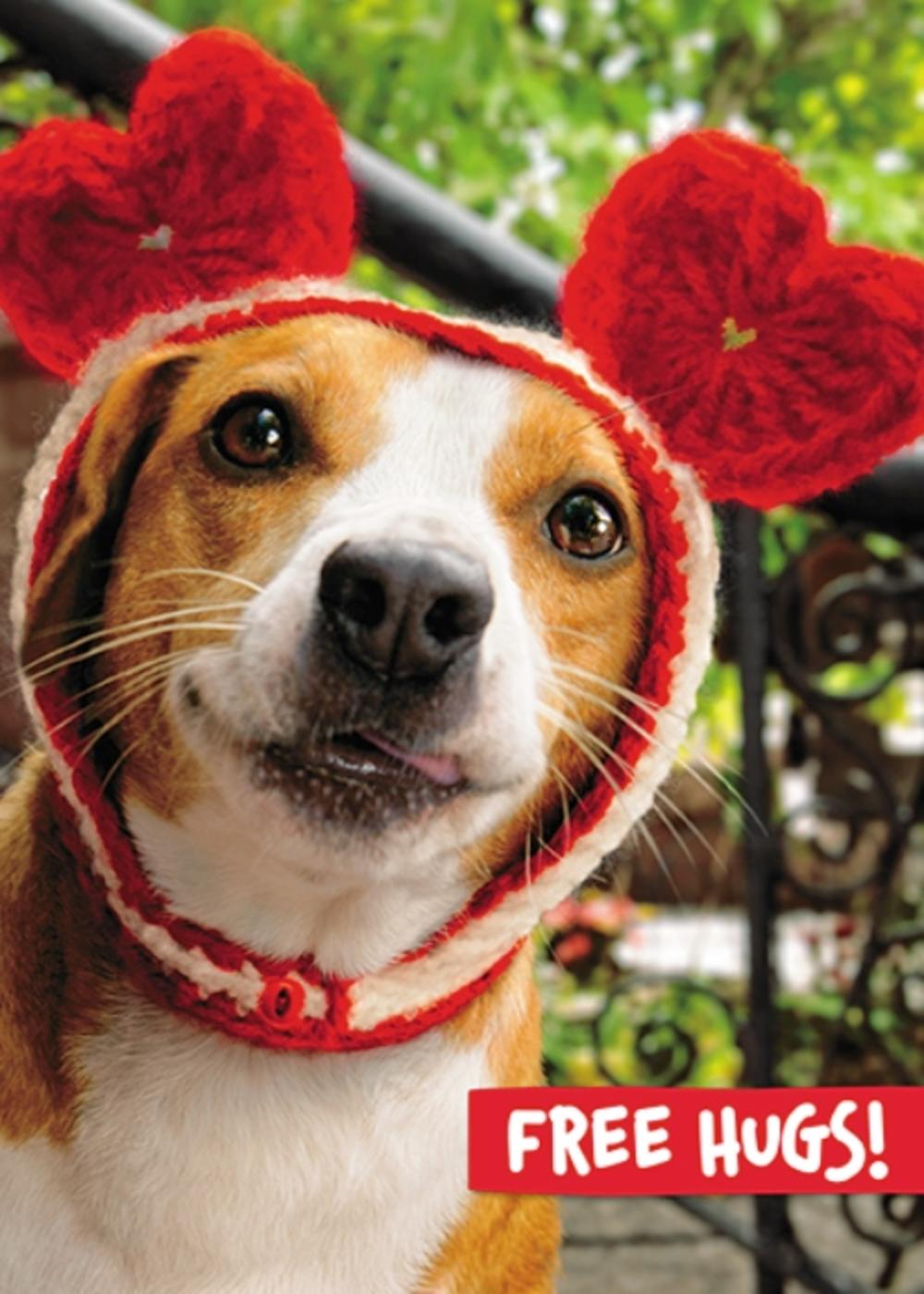 Avanti Valentine's Day Dog I Ruv You Greeting Card