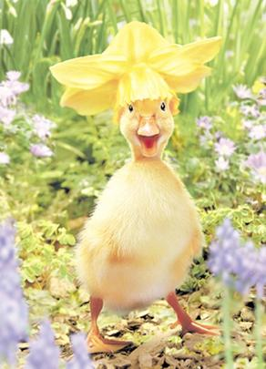 Avanti Cute Duckling Happy Easter Photo Greeting Card