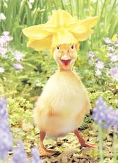 Avanti Cute Duckling Happy Easter Photo Greeting Card