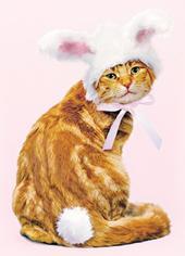 Avanti Cute Cat Happy Easter Photo Greeting Card