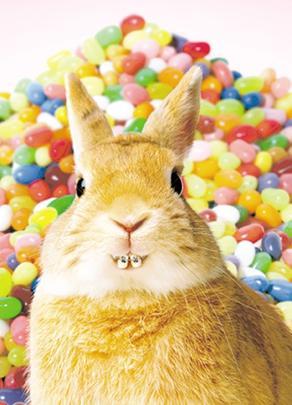 Avanti Bunny In Braces Happy Easter Photo Greeting Card