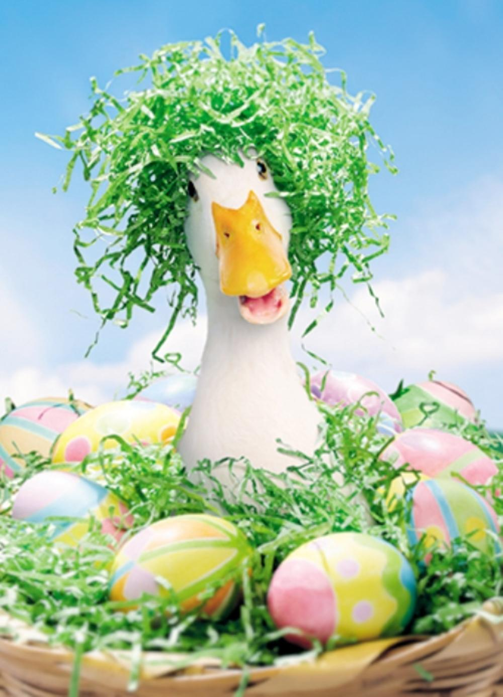 Avanti Funny Duck Happy Easter Photo Greeting Card