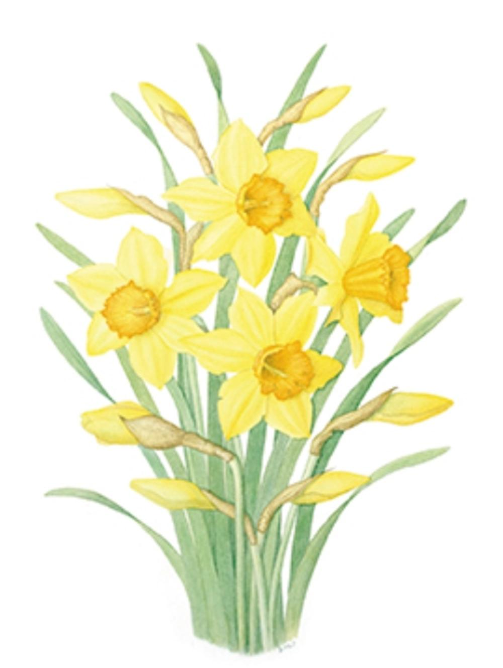 Pack of 4 Daffodil Mini Medici Happy Easter Greeting Cards