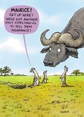 Meerkat Insurance Funny Birthday Greeting Card