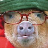 Pig In Glasses Happy Father's Day Greeting Card