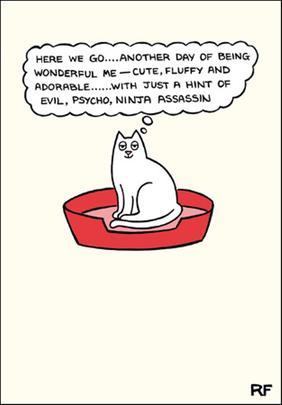 Wonderful Cat Cartoon Cat Humour Greeting Card