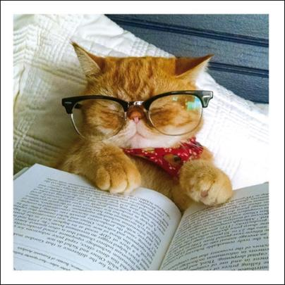 Bookworm Cats Cattitude Greeting Card