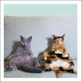Couch Potatoes Cats Cattitude Greeting Card