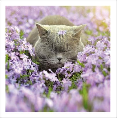 Happiness Cats Cattitude Greeting Card