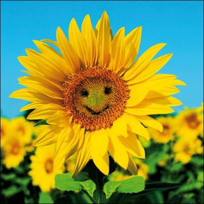 Sunny Sunflower Framed Photo Art Greeting Card