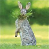 Gardener's Helper Hare Framed Photo Art Greeting Card