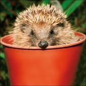 Hedgehog Hiding Out Framed Photo Art Greeting Card