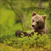 Boo Baby Bear Framed Photo Art Greeting Card