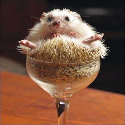 Snug Hedgehog Framed Photo Art Greeting Card