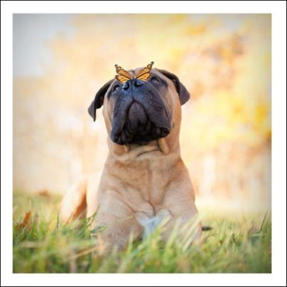 Bruno The Gentle Giant Loose Leashes Greeting Card