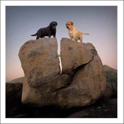 Lewie & Clark Rock Candy Loose Leashes Greeting Card