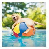 Ducky The Pool Boy Loose Leashes Greeting Card