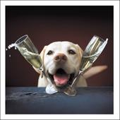 Dizzy Life Of The Party Loose Leashes Greeting Card