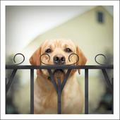 Watson The Sleuth Loose Leashes Greeting Card
