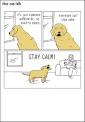 Everyone Just STAY CALM! Funny They Can Talk Greeting Card