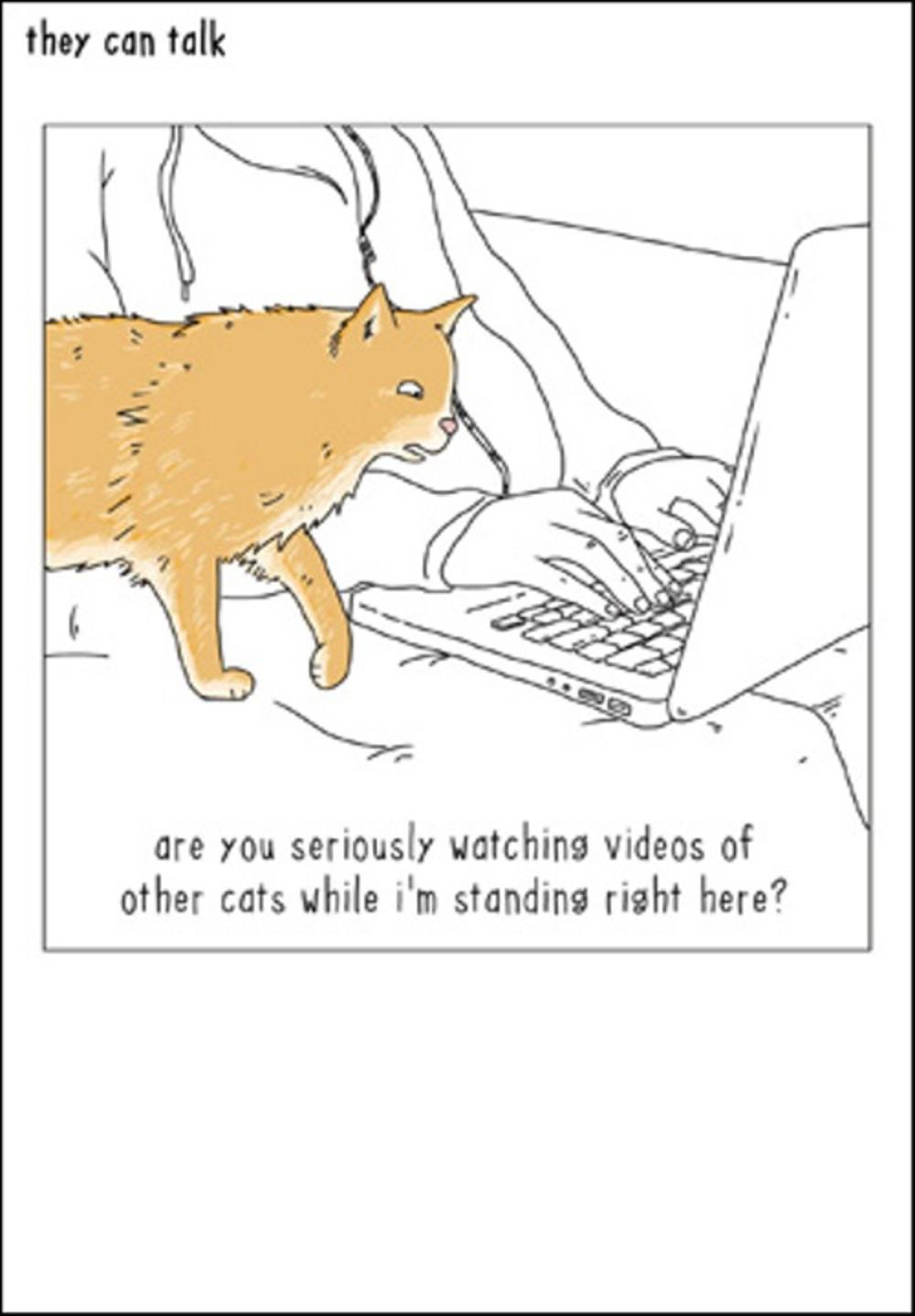 Cat Videos Funny They Can Talk Greeting Card Cards Love Kates
