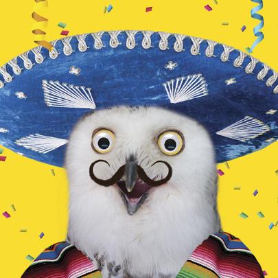 Mexican Owl Googlies Birthday Card
