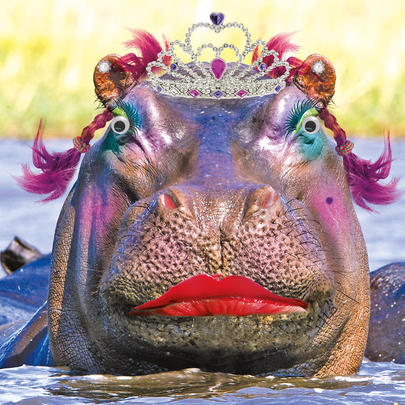 Lady Of Leisure Hippo Googlies Birthday Card
