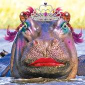 Lady Of Leisure Hippo Googlies Birthday Card
