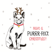Pack of 8 Purrr-Fect Christmas Marie Curie Charity Christmas Cards