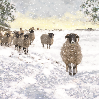 Pack of 8 Sheep In The Snow Samaritans Charity Christmas Cards