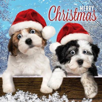 Cute Puppy Dogs Googlies Christmas Card