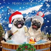 Festive Pugs Googlies Christmas Card