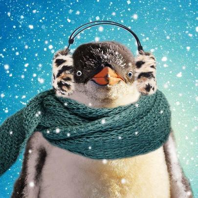 Festive Penguin Googlies Christmas Card