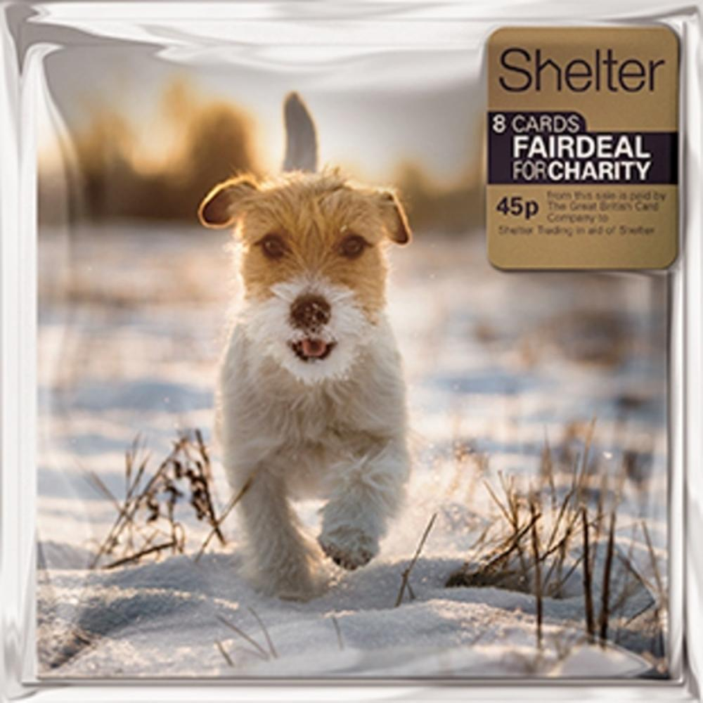 Pack of 8 Winter Walkies Shelter Charity Christmas Cards