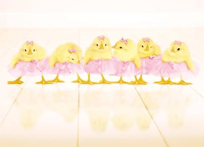 Avanti Cute Chicks Tutu's Happy Easter Photo Greeting Card