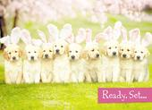 Avanti Cute Puppies Happy Easter Photo Greeting Card
