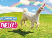 Avanti Party Llama Birthday Greeting Card