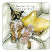 Milk No Sugar Border Terrier Little Dog Laughed Coaster