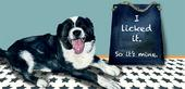 Licked It So It's Mine Little Dog Laughed Greeting Card