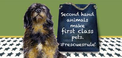 Dog Rescues Rule Little Dog Laughed Greeting Card