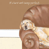 Hard Work Being Perfect Little Dog Laughed Greeting Card