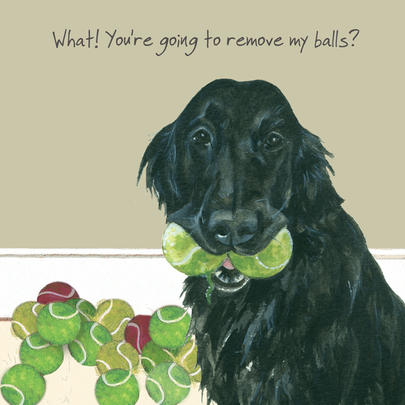 Remove My Balls Little Dog Laughed Greeting Card