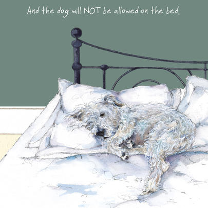 Dog Not Allowed On The Bed Little Dog Laughed Greeting Card