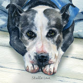 Staffie Love Little Dog Laughed Greeting Card