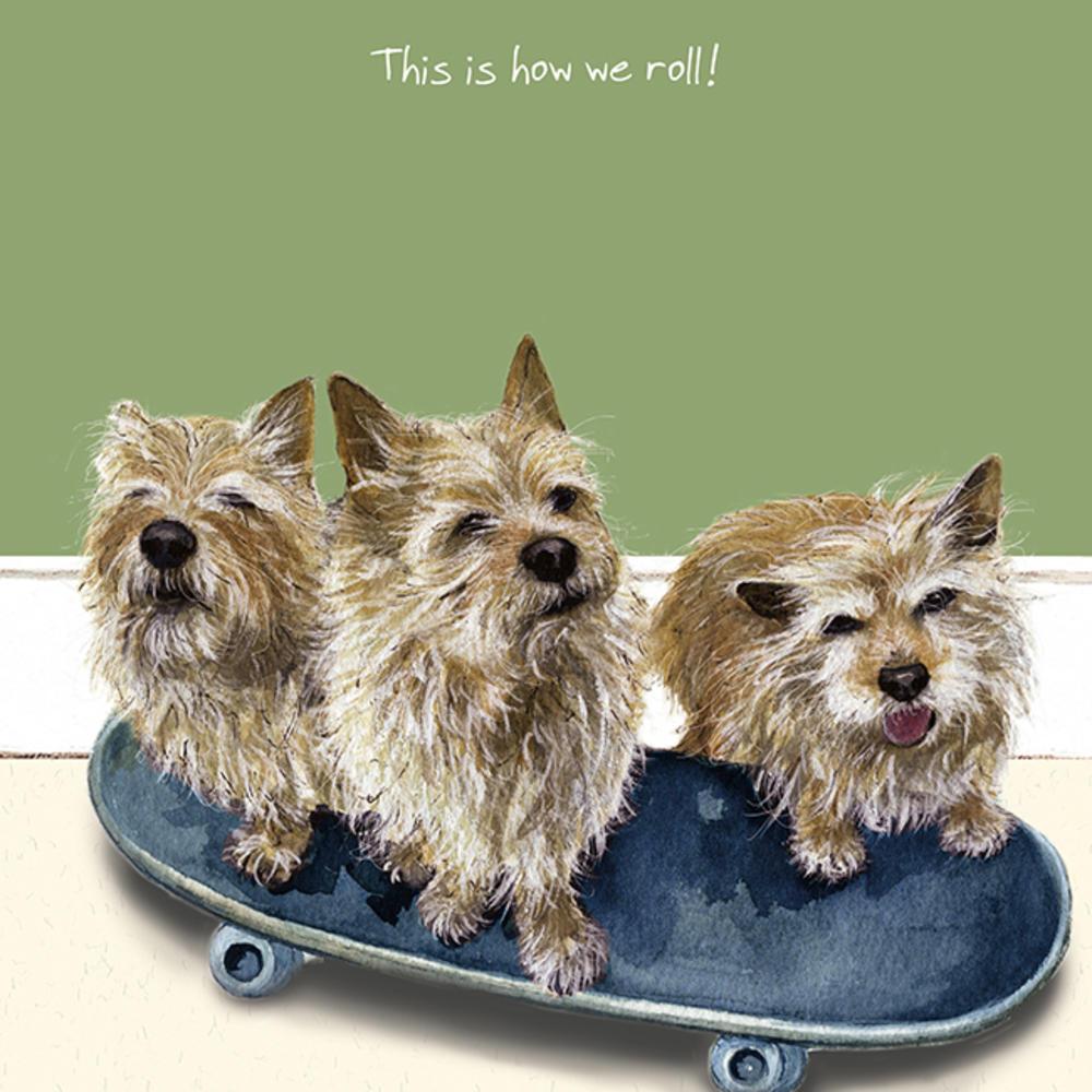 Skateboard Little Dog Laughed Greeting Card