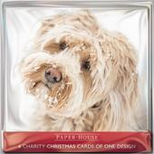 Pack of 6 Dog In The Snow Charity Christmas Cards Supports Multiple Charities